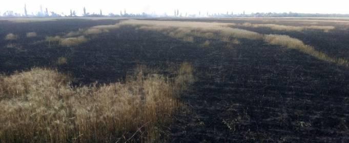 У Миколаївській області горіли поля пшениці