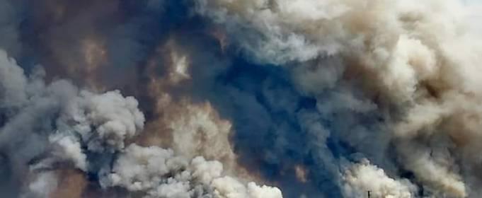 Лесной пожар в Луганской области назван чрезвычайной ситуацией регионального уровня