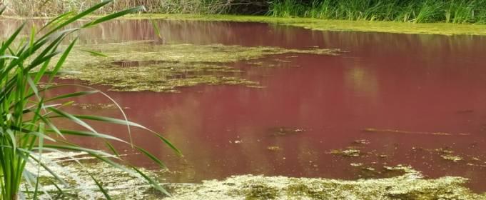 В Нежине порозовело озеро