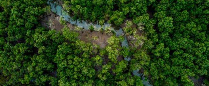 Леса Амазонии могут распространить новые вирусы