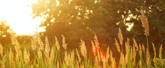 Літо в Україні триватиме до кінця вересня