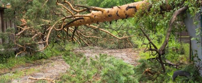 Во Львовской области после урагана упавшее дерево убило человека