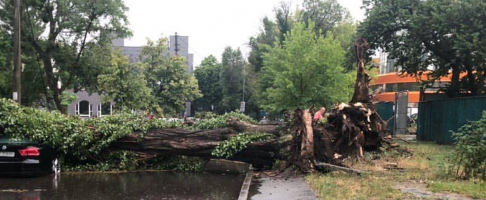 У Києві гроза повалила дерева, злива затопила вулиці