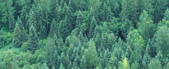 Площадь лесов на Земле продолжает сокращаться