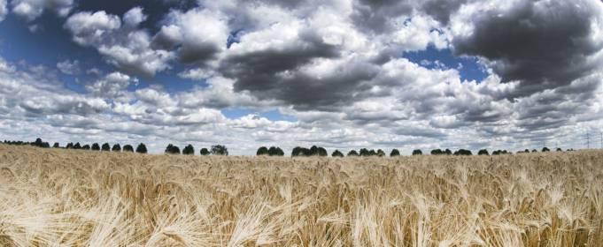 Погода в Україні на п'ятницю, 24 липня