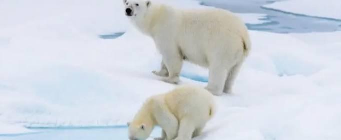 На арктическом архипелаге зафиксирована самая высокая в истории температура