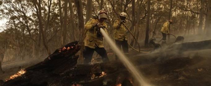 Пожежі в Австралії погубили і дезорієнтували майже 3 млрд тварин