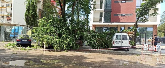 В Ивано-Франковске непогода ломала деревья и повредила автомобили