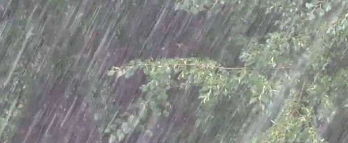 Непогода в Харькове: порыв ветра чуть не унес собаку