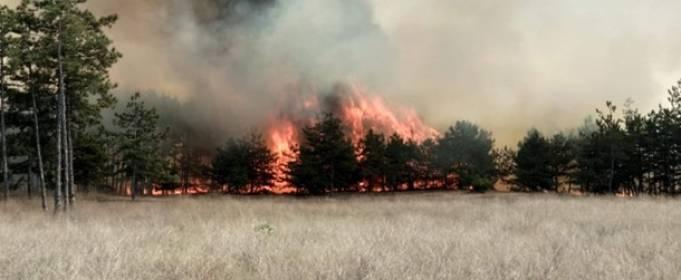 Кількість лісових пожеж в Україні збільшилася в три рази