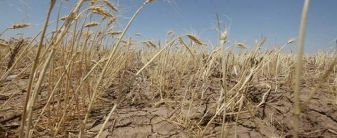 Засуха в Украине негативно повлияла на сельскохозяйственные культуры