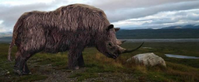 Изменение климата стало причиной вымирания шерстистого носорога