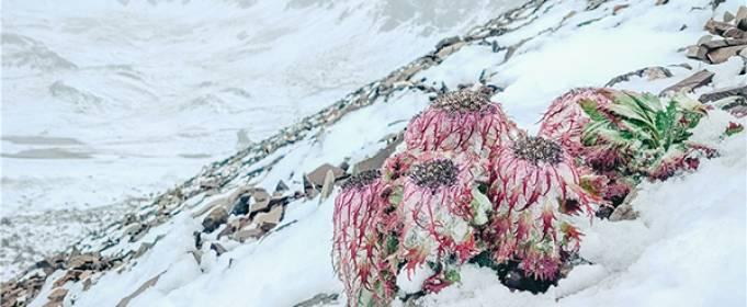 Снегопад в середине августа обрушился на юго-запад Китая