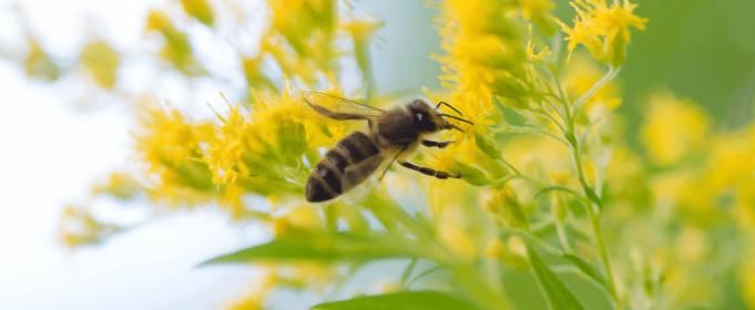 Климатические изменения поссорили пчёл с цветами