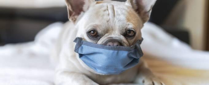 Какие животные больше всего рискуют заразиться коронавирусом