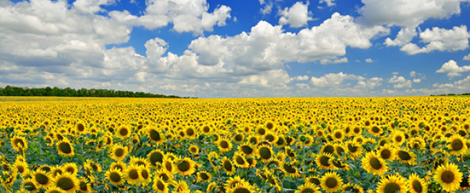Погода в Украине на четверг, 3 сентября