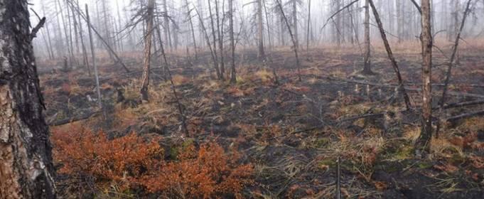 Лесные пожары вызывают таяние вечной мерзлоты