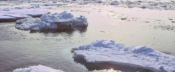 Площадь льда в Беринговом море достигла минимума за 5500 лет