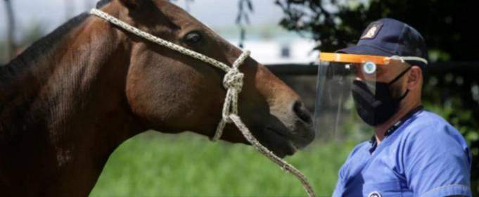 Лошади помогут в лечении COVID-19