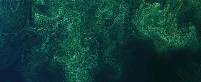 Фитопланктон украсил Балтийское море малахитовым узором
