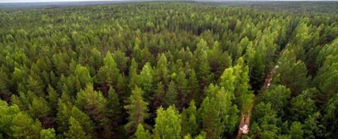 Ученые выяснили, смогут ли леса спасти планету от глобального потепления