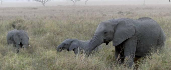 За последние 40 лет популяции диких животных сократились на 68%