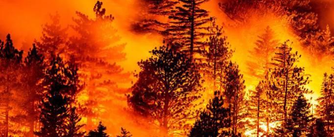 Природные пожары на западе США уносят все новые жизни
