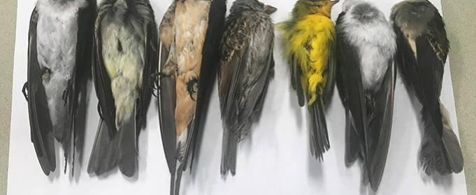 В Нью-Мексико гибнут сотни тысяч птиц