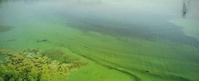 Цветение воды в Днепре вызвано избыточным количеством фосфатов