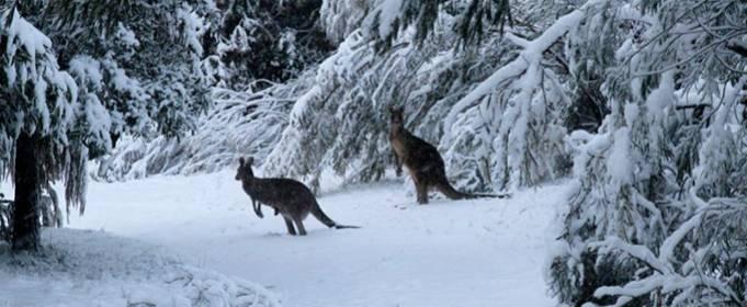 В Австралии в середине весны выпал снег