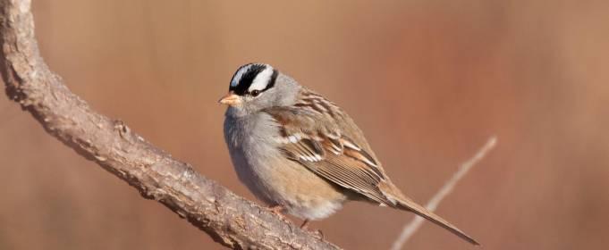 Птичье пение изменилось из-за COVID-19