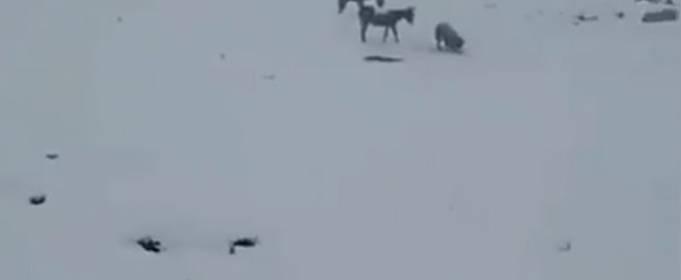 На Иран обрушился ранний снегопад