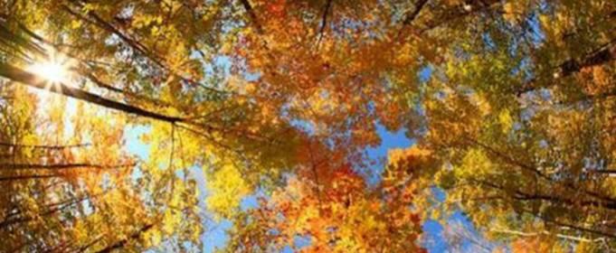 Погода в Украине на воскресенье, 11 октября