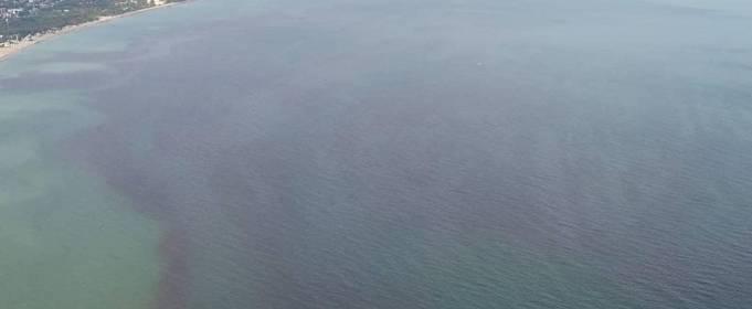В море у Одессы начался «красный прилив». Экологи бьют тревогу