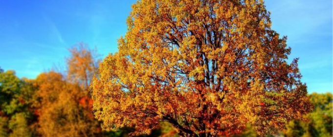 Погодные приметы на 14 октября