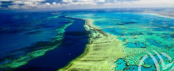 Большой Барьерный риф потерял 50% кораллов
