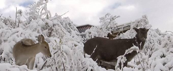 Ранние снегопады накрыли западный Китай