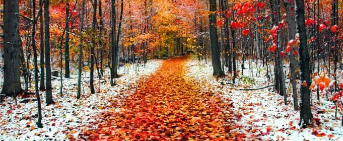 Дожди, снега и морозы: синоптики рассказали, какой будет погода в ноябре