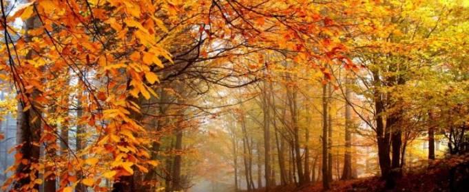 Погодні прикмети на 20 жовтня