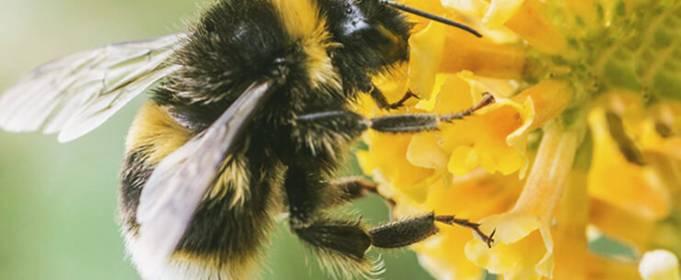 Уровень радиации в Чернобыле вредит пчелам
