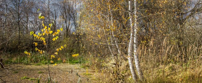 Погода в Україні на неділю, 25 жовтня