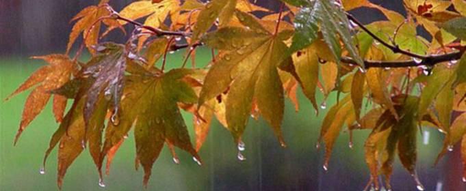 Погода в Украине на понедельник, 2 ноября