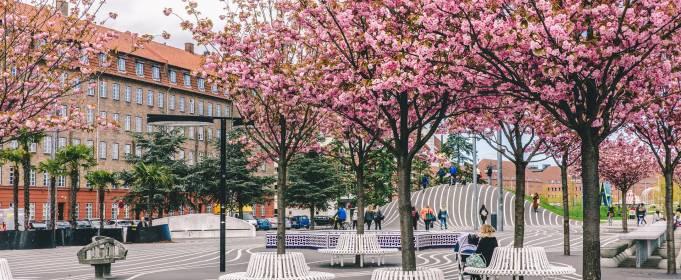 Копенгаген отдаст деревья в хорошие руки