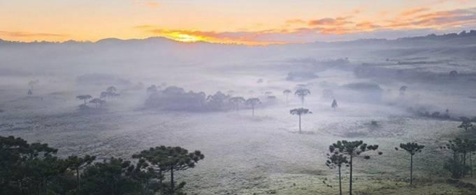 Рекордные холода в Бразилии нанесли значительный ущерб урожаю фруктов