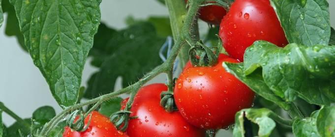 У Норвегії винайшли новий спосіб вирощування овочів, який не шкодить екології