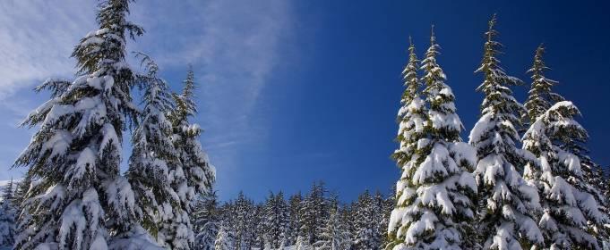 До -16 градусов: синоптик рассказал, какой будет зима в Украине