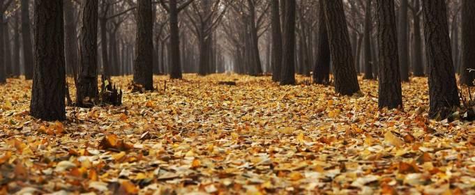 Pogoda w Polsce na 19.11.2020