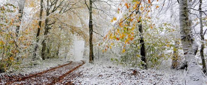 Погода в Україні на суботу, 21 листопада