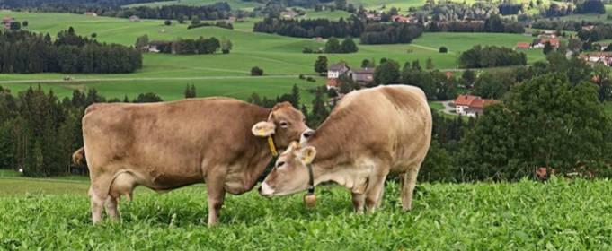 Ученые нашли способ борьбы с изменением климата с помощью молока