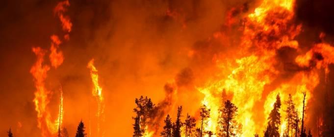 Всередині лісової пожежі. Моторошні відео очевидців, які потрапили у вогняну пастку